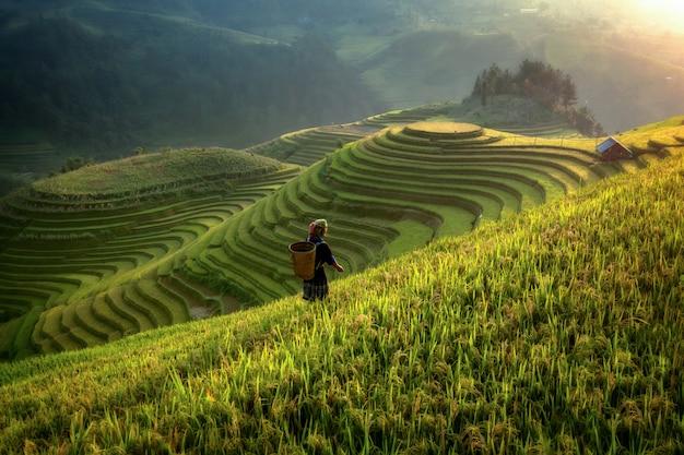 Pola ryżowe na tarasowych mu cang chai, yenbai, wietnam. krajobrazy wietnamu.