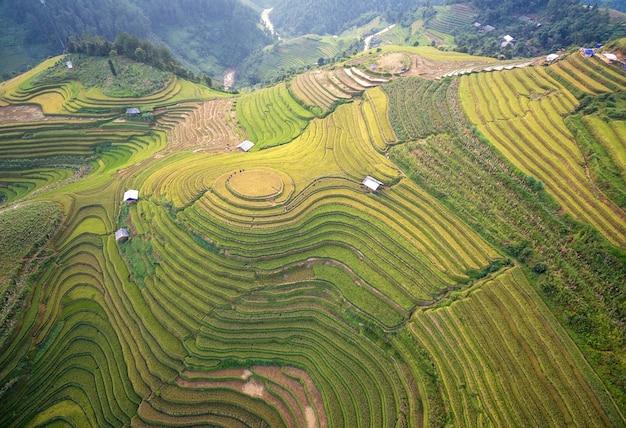 Pola ryżowe przygotowują żniwa w północno-zachodniej wietnamie. wietnamskie krajobrazy.