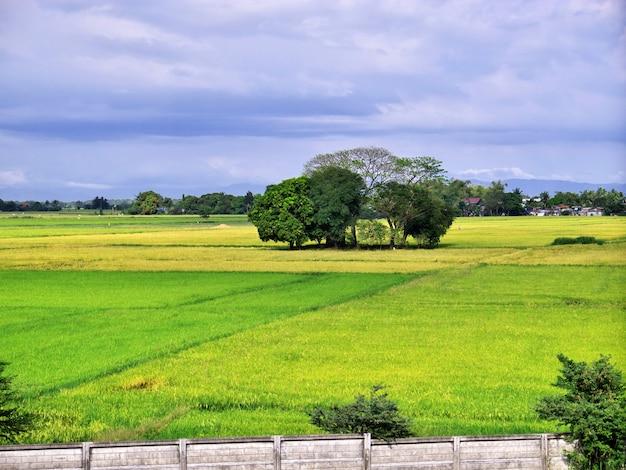 Pola ryżowe w banaue filipiny