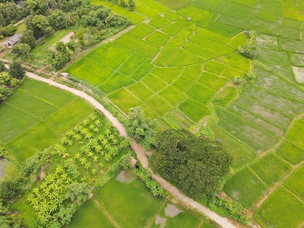 Pola ryżowe. wysoki kąt strzału z dronów w tajlandii