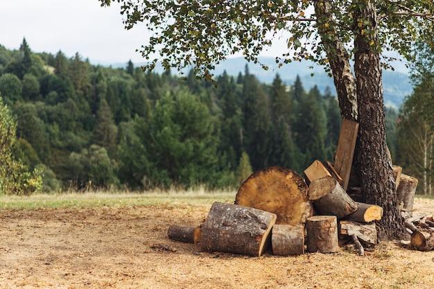 Polana w lesie ze złożonym drewnem opałowym