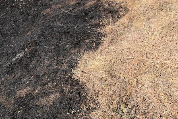Polana ze spalonymi drzewami i trawą czarną spaloną łąką