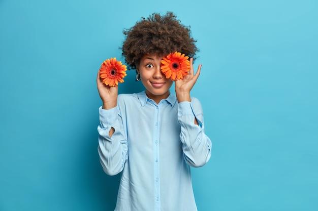 Półdługie ujęcie szczęśliwej, kręconej, młodej kobiety zakrywa oczy pomarańczowymi gerberyami lubi kwiaty ma dobry nastrój nosi koszulę odizolowaną na niebieskiej ścianie