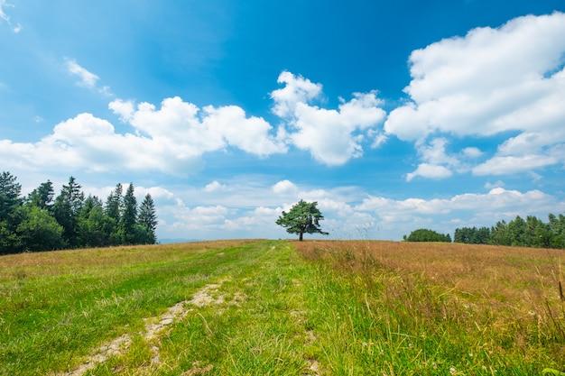 Pole, drzewo i niebieskie niebo