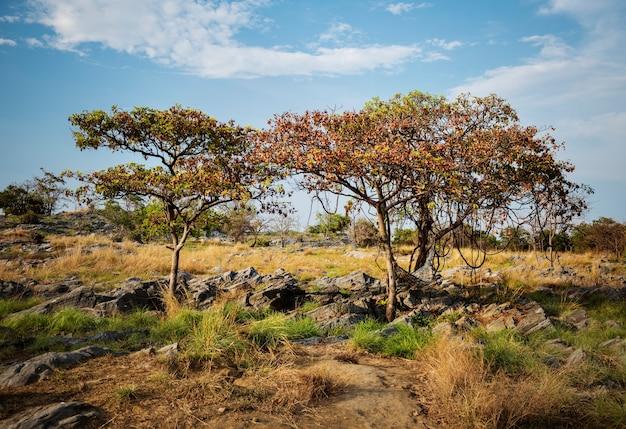 Pole drzewo rock nature miejsce wypoczynek