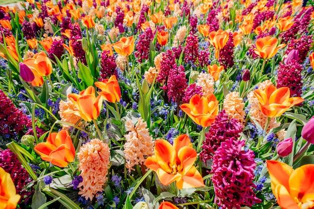 Pole dzikich kwiatów. wiosenny krajobraz holandia