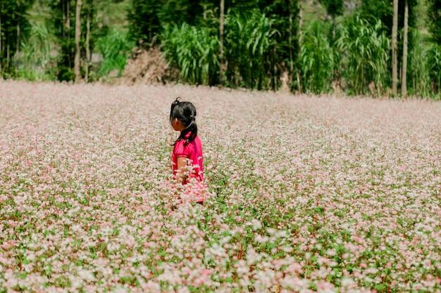 Pole gryka kwitnie przy brzęczeniami giang, wietnam. ha giang słynie z globalnego parku geologicznego płaskowyżu dong van kras.