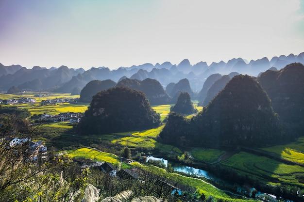 Pole kwiatów rzepaku i wioski w wanfenglin national geological park (forest of ten thousands peaks), chiny