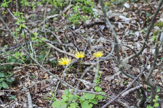 Pole kwitnących żółtych kwiatów