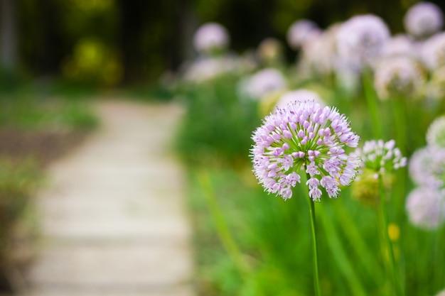 Pole lato różowe i białe kwiaty w ciepłym świetle słonecznym