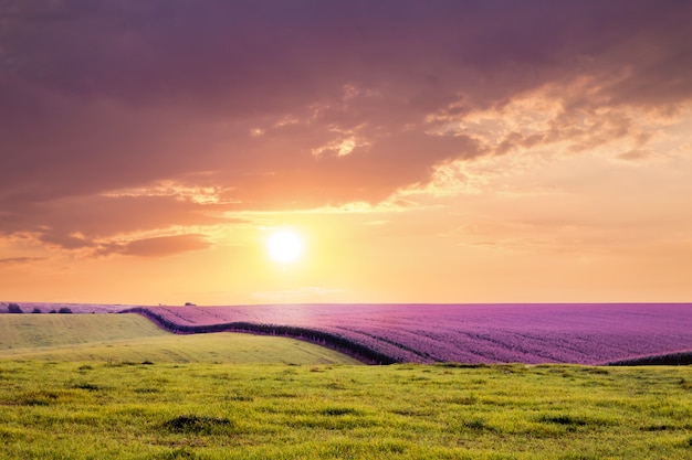 Pole lawendy i trawy przed zachodem słońca. ciemne dramatyczne chmury nad polem podczas wschodu lub zachodu słońca
