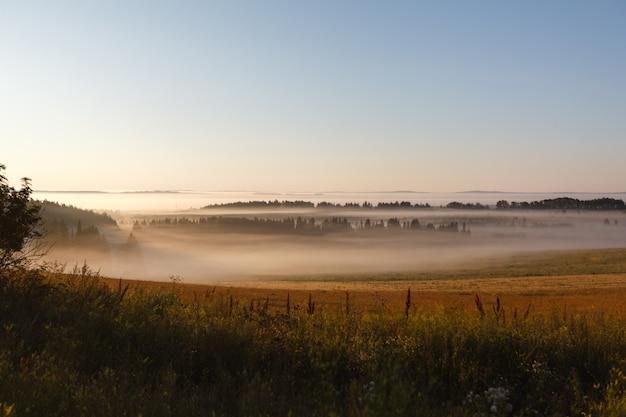 Pole maja w słońcu i mgle