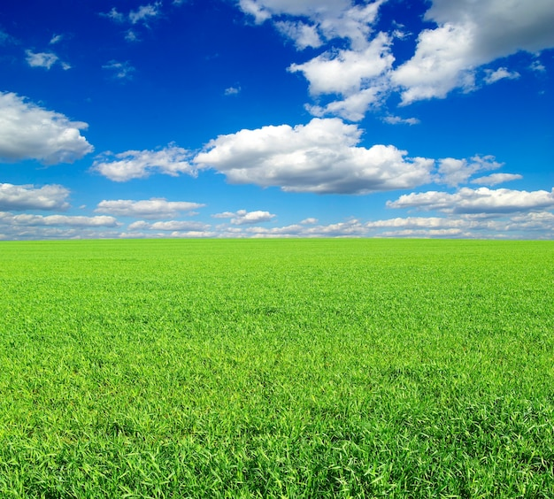 Pole na tle błękitnego nieba