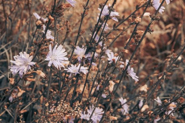 Pole o delikatnych polnych kwiatach, spokojnych kolorach