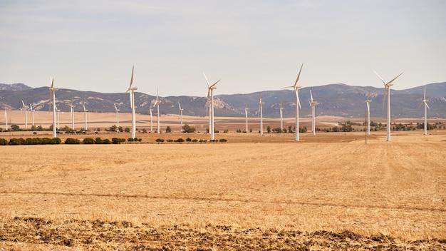 Pole pełne turbin wiatrowych produkujących energię elektryczną. pojęcie energii odnawialnej. kadyks, hiszpania.