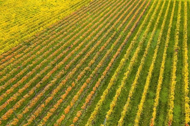 Pole pokryte trawą i kolorowe kwiaty w słońcu
