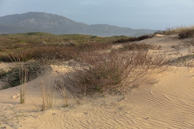 Pole pokryte zielenią i piaskiem otoczone wzgórzami pod zachmurzonym niebem
