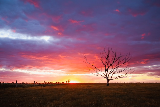 Pole pokryte zielenią z nagim drzewem pod zachmurzonym niebem podczas różowego zachodu słońca