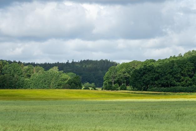 Pole porośnięte trawą i drzewami pod błękitnym pochmurnym niebem - idealne na tapety