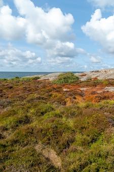 Pole porośnięte trawą i skałami otoczone rzeką w ciągu dnia w słońcu
