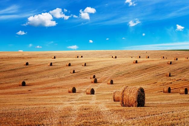Pole pszenicy po zbiorach z bel słomy o zachodzie słońca
