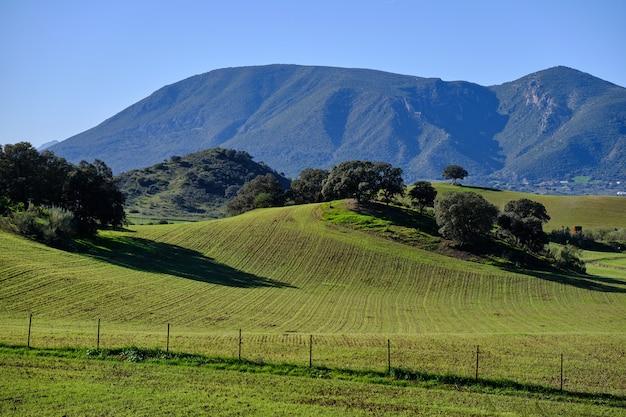 Pole rolne i drzewa na wzgórzach w słoneczny dzień