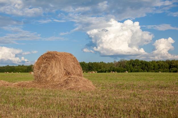 Pole rolne z zebranym sianem i stosami w lecie. stogi siana. zbiór siana i słomy do karmienia zwierząt