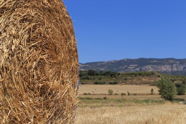 Pole rolnicze, na którym po żniwach pszenicy ułożono stogi słomy