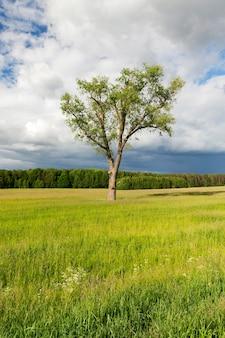 Pole rolnicze, na którym rośnie samotne drzewo.
