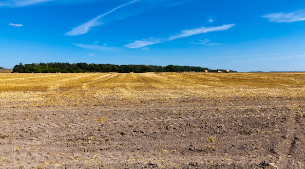Pole rolnicze