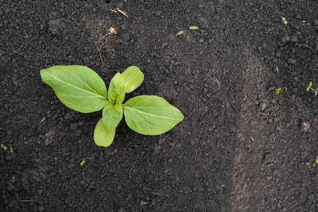 Pole rolnika z małymi młodymi kiełkami słonecznika