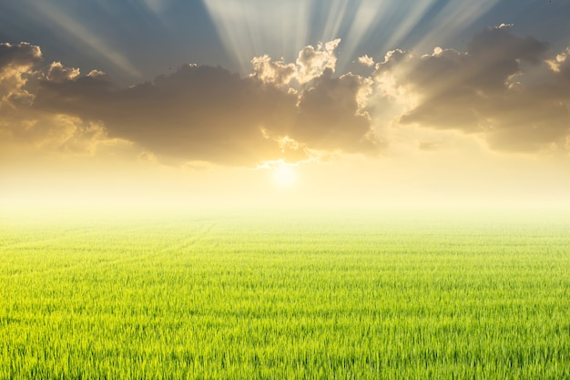 Pole ryżowe i zachód słońca.