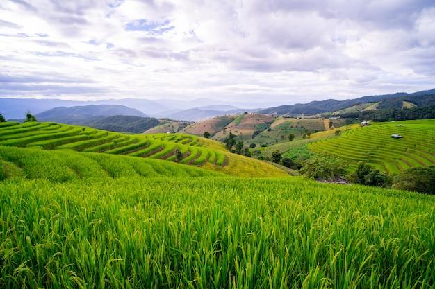 Pole ryżowe w wiosce bongpian w dystrykcie mae chaem, chiang mai, tajlandia
