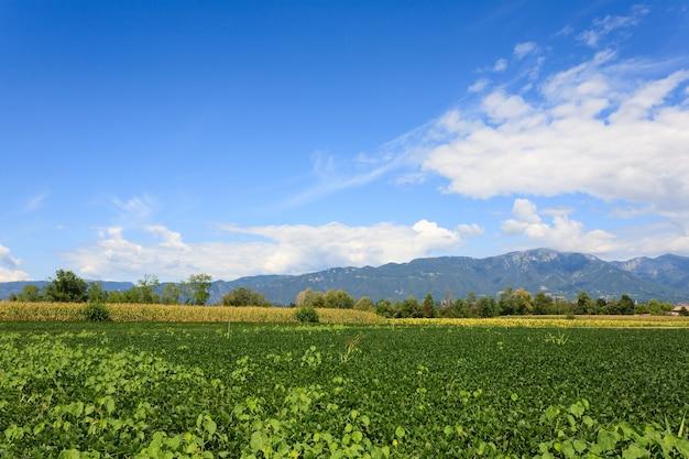 Pole soi z górami w tle. włoskie rolnictwo. wiejska sceneria