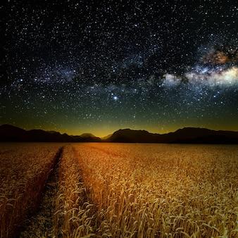 Pole trawy. pszenica łąkowa pod niebem gwiazd. elementy tego obrazu dostarczone przez nasa