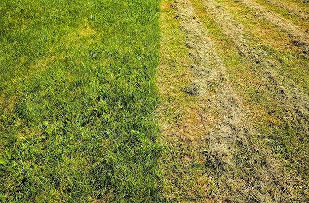 Pole uprawne, na którym skupuje się paszę dla zwierząt gospodarskich, suszoną trawę na siano