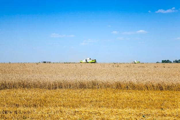 Pole uprawne, na którym zbieramy dojrzałe zbiory zbóż