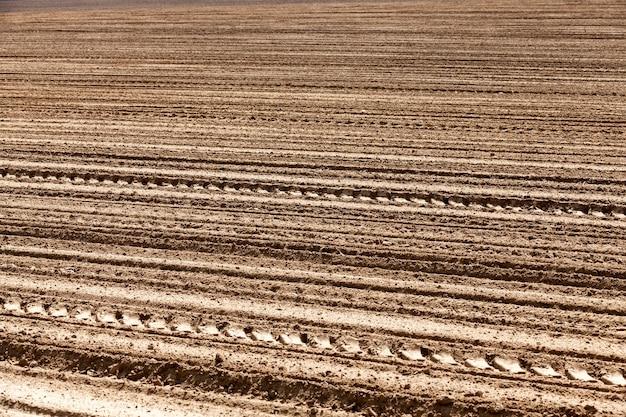 Pole uprawne obsiane zbożem wiosną lub latem z polem z ziarnem pszenicy lub żytem w glebie
