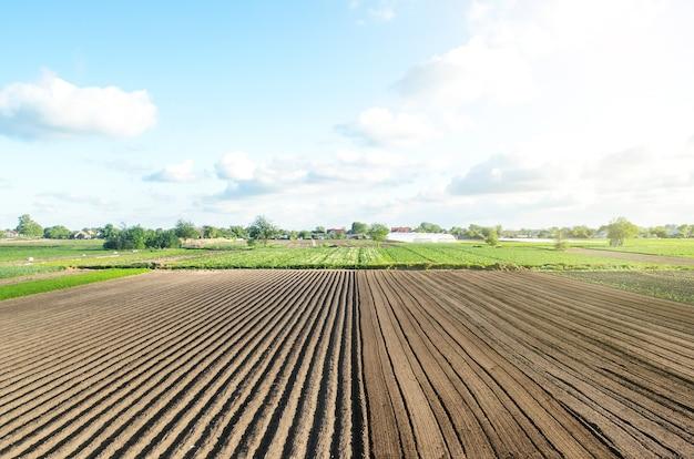 Pole uprawne w połowie przygotowane do sadzenia oznaczanie pola w rzędach technologia rolnicza i standaryzacja