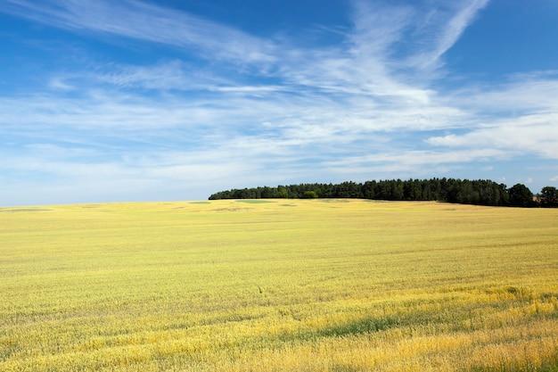 Pole uprawne z młodymi roślinami wiosną i latem, z błękitnym niebem i lasami