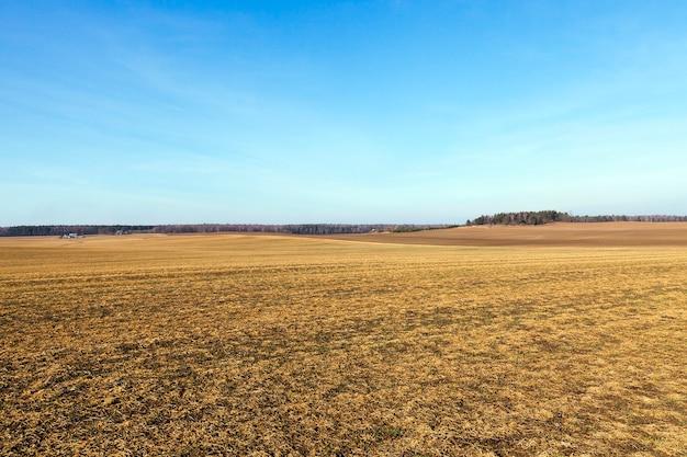 Pole uprawne z żółkniętą trawą zamierającą w okresie jesiennym. zdjęcie krajobrazu, błękitne niebo w tle