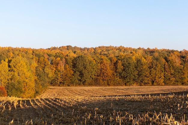Pole uprawne ze ścierniskiem po zbiorze zbóż, jesienny krajobraz przy słonecznej pogodzie o zmierzchu lub o świcie słońca