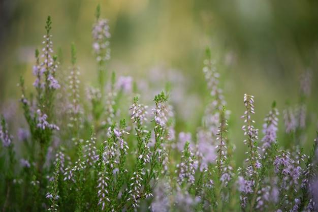Pole w lesie z delikatnymi małymi kwiatami