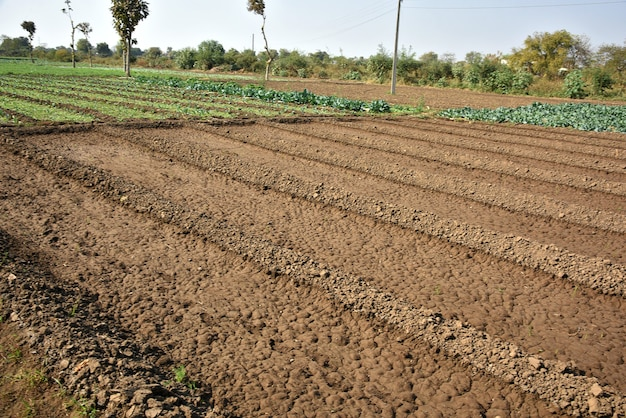Pole wiosna zbóż z nasion uprawianych w rzędach gospodarstwo ekologiczne