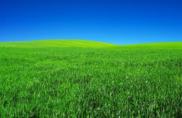 Pole z niebieskim niebem
