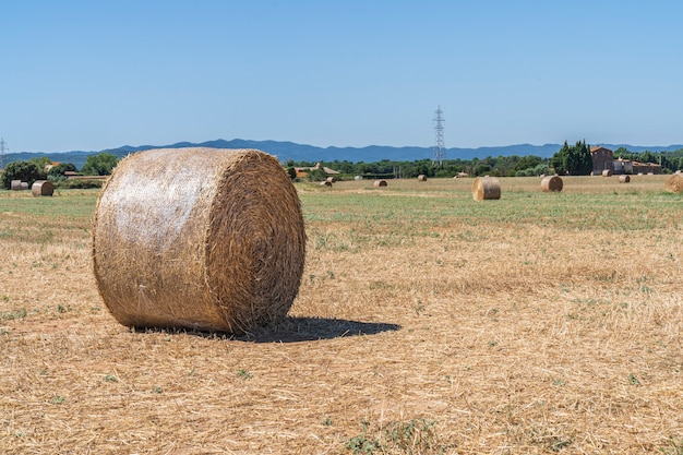 Pole z okrągłymi belami słomy w gironie, katalonia, hiszpania.