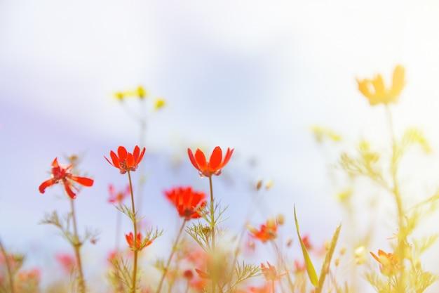 Pole z trawą, fioletowymi kwiatami i czerwienią.