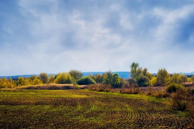 Pole z uprawami pszenicy ozimej jesienią przy pochmurnej pogodzie.