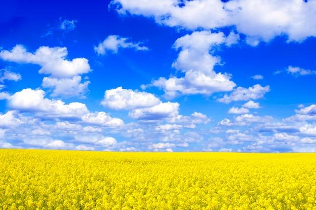 Pole z żółte kwiaty i chmury