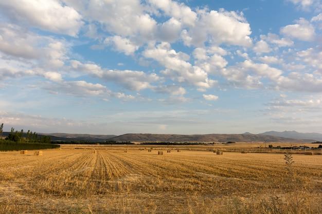 Pole zbóż pod błękitnym niebem